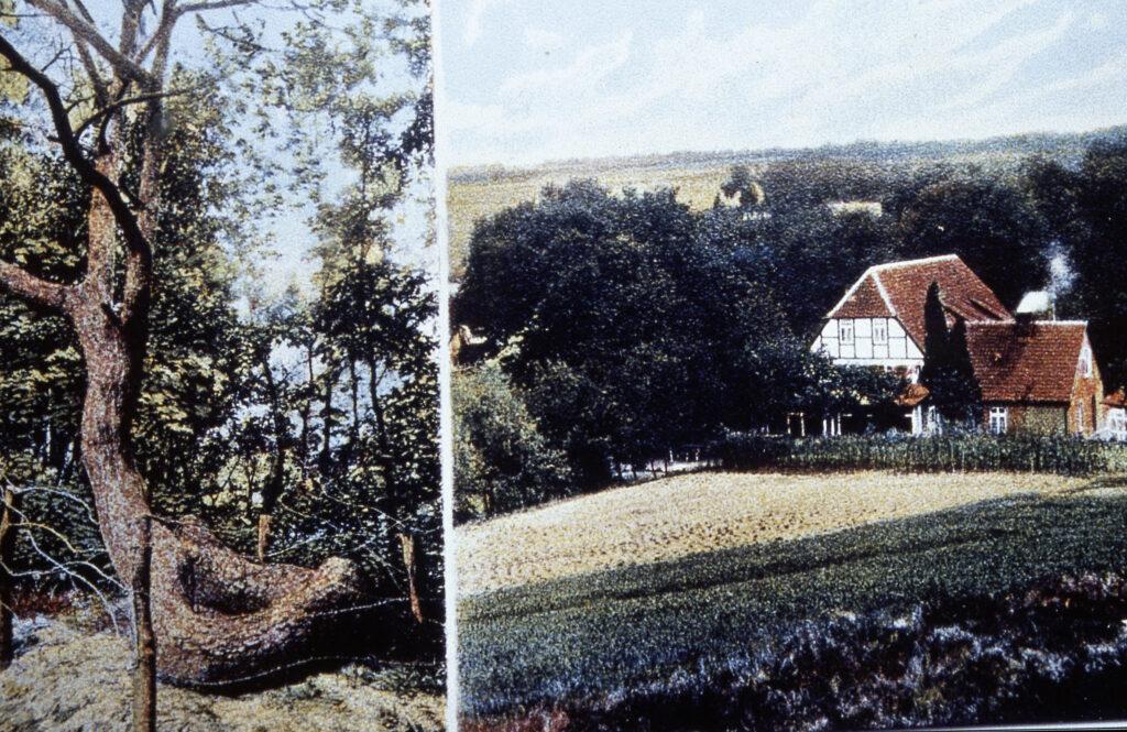 """Schlangenbaum und Blick auf Gasthaus """"Zum Schlangenbaum"""" vom Schierenberg, 1913"""