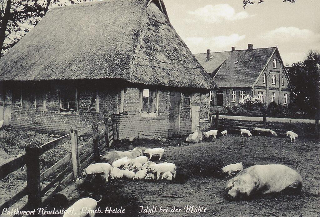"""Blick von """"De Möhl"""" zum Autohaus Maack, 1966"""