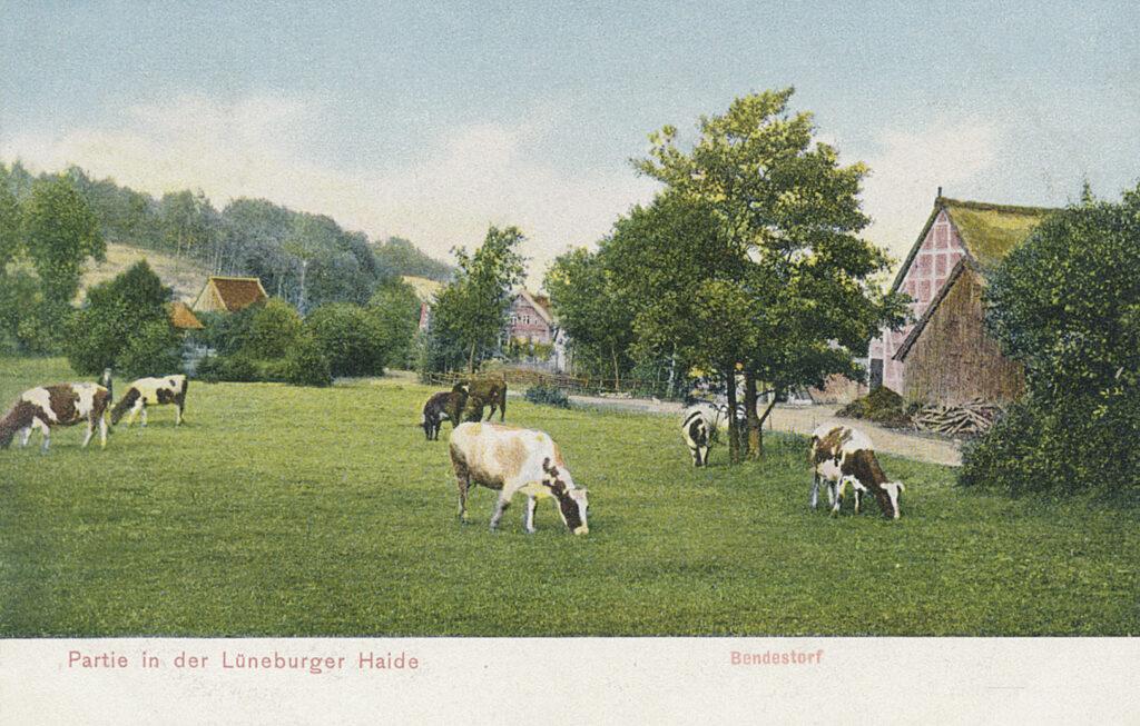 Rüschdamm (kolorierte Postkarte), 1915